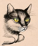 Green eyed cat. Ink and pencil illustration of a cat Royalty Free Stock Photography