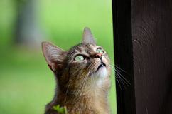 Green eyed cat looking up Royalty Free Stock Image