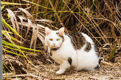 Green Eyed Cat in Meadow Royalty Free Stock Photos