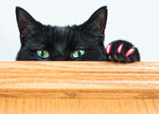 Green eyed cat peeking over shelf. Mischievous black cat peeking over a shelf at the camera shot with a shallow depth of field Royalty Free Stock Image