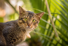 Green-eyed cat Royalty Free Stock Photos