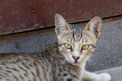 Green eyed cat, Sheena. This is Sheena, she lives in my neighborhood on the streets with her friend Brownie. She is quite and playful. My neighbor`s daughter Stock Photos