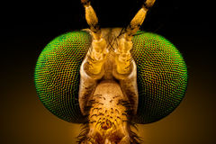Green Eyed Crane Fly. Extreme macro - full frontal portrait of a green eyed crane fly, magnified through a microscope objective width of the frame is 2. 2mm royalty free stock images