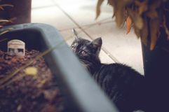 Green Eyed kitty Stock Photography