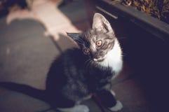 Green Eyed kitty Stock Photos