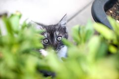 Green Eyed kitty Royalty Free Stock Photography