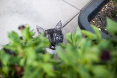 Green Eyed kitty Stock Image