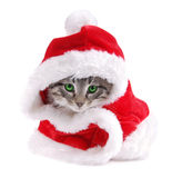Green eyed kitty in Santa outfit. A green eyed kitty wearing a Santa outfit Royalty Free Stock Photos