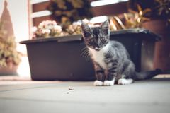 Green Eyed kitty Royalty Free Stock Images