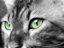 Green eyed monster in black and white stock photo