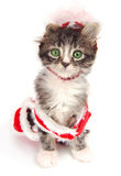 Green eyed tabby kitten with Christmas outfit. A green eyed kitten wearing a Christmas outfit Royalty Free Stock Photo