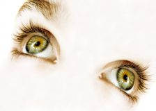 green eyes royalty free stock photo