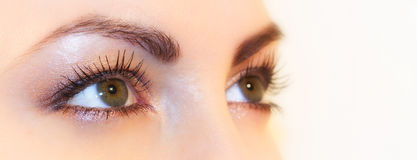 Green Eyes. Beautiful green eyes looking to the sky Stock Photos