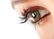 Green eyes Royalty Free Stock Photo