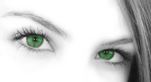 Green Eyes stock photos