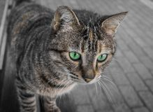 Green eyes brunete Stock Photo