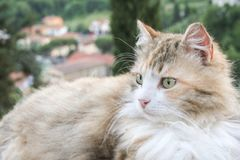 Green eyes. Cat  with beautiful landscapa in background Stock Photography