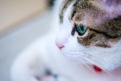 Green eyes cat looking for something. Green eyes cat is looking for someone Stock Images