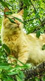 Green eyes. Cat in tree branch leaves pets animals Royalty Free Stock Photography