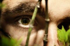 Green eyes of a young man Royalty Free Stock Photos