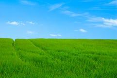 green för 2 fält Arkivfoto