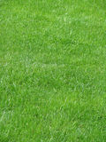 green för 2 gräs Arkivbilder