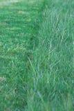 green för 2 gräs Royaltyfria Bilder