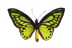 green för 3 fjäril Arkivbild