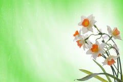 green för bakgrundsbukettpåskliljar Arkivbild