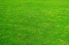 green för bakgrundsfältgräs Modell och textur för grönt gräs Grön gräsmatta för bakgrund arkivbilder