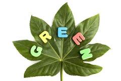 green för begreppsutveckling Arkivfoto