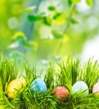 green för easter ägggräs arkivfoton