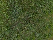 green för gräs 3d framförde textur Arkivfoto