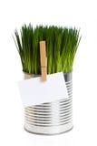 green för gräs för affärskort arkivbilder
