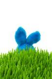 green för kanineaster gräs Royaltyfria Bilder