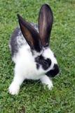 green för kanineaster gräs Arkivfoto