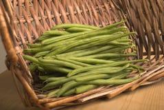 green för korgbönabobby Royaltyfri Fotografi