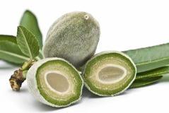 green för mandelfilialsnitt Royaltyfri Fotografi