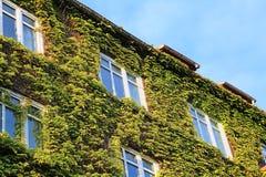 Green_facade imagem de stock royalty free