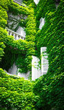 Green facade with white shutters Stock Image