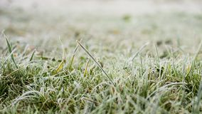 Green faded grass with frost in the early winter morning royalty free stock image