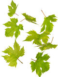 Green falling leaves Stock Photo