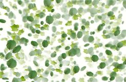 Green falling leaves autumn background. White background stock photos