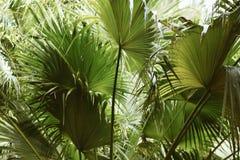 Green Fan Leaf Plant Stock Photo
