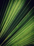 Green fan palm leaf background. Concept about geometric lines in nature pattern royalty free illustration