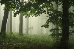Green fantasy forest with fog Stock Photos