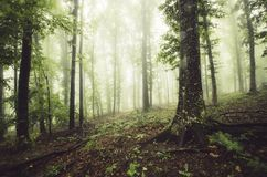 Green fantasy forest with fog. And lush vegetation after rain Stock Photos