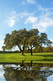 Green farm Royalty Free Stock Images