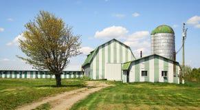 Green farm Stock Photos