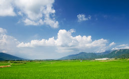 Green farm with blue sky and white clouds Royalty Free Stock Photos